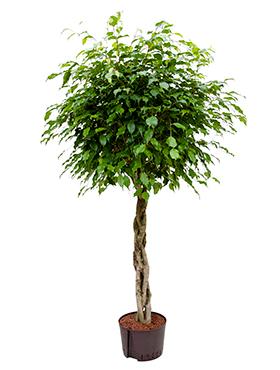 Hydroponické rastliny