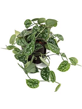 Malé hydroponické rastliny