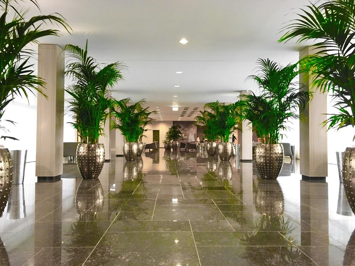 Palmy kentie v luxusných zlatých nádobách LAOS gold vo vstupnej hale hotela