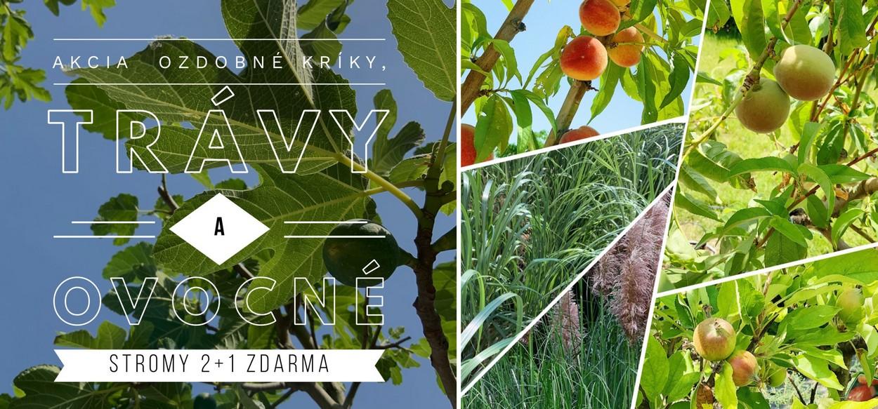 Letná akcia na ovocné stromy a trávy - viac info na predajni!