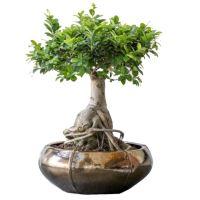 Kvetináč GOUD Bowl (Moda) 76/29 cm, zlatá