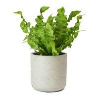 Kvetináč ECO-LINE Charlie, vyblednutá sivá