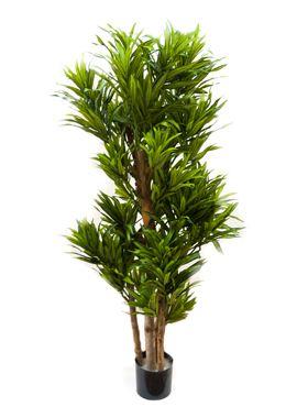 Umelá rastlina pleomele song of jamaica V120 cm
