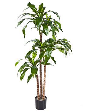 Umelá rastlina dracaena fragrans steud V120 cm
