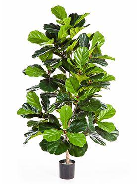Umelá rastlina ficus lyrata bush V130 cm