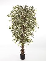 Umelá rastlina ficus hawaiian liana var. V150 cm