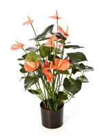 Umelá antúria (anthurium de luxe), oranžová, V78 cm