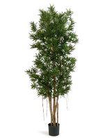Umelá rastlina podocarpus V150 cm