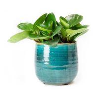 Kvetináč keramický INDOOR POTTERY Pot IRIS, tyrkysová