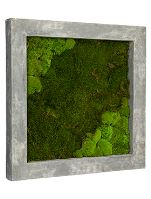 Machový obraz s rámom POLYSTONE Raw grey, 70x70cm, sivá