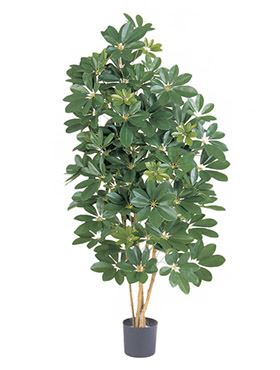 Umelá rastlina natural schefflera V80cm