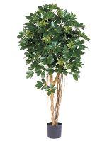Umelá rastlina schefflera arboricola na kmeni V170 cm