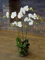 Umelá orchidea (phalaenopsis) s machom, biela, V90 cm
