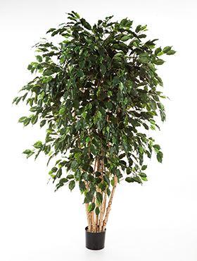 Umelá rastlina ficus exotica, viac kmienkov V180 cm