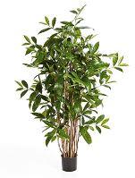 Umelá rastlina dracaena surculosa tree V120 cm
