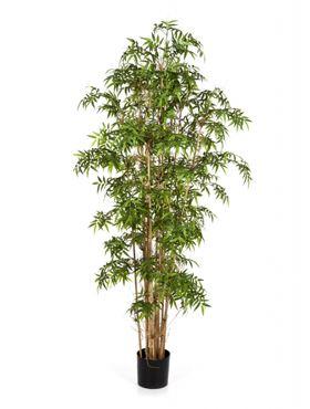 Umelý bambus (new japanese bamboo) V170cm