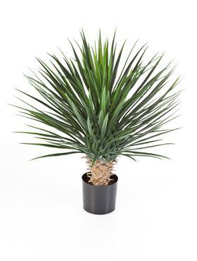 Umelá rastlina yucca rostrata de luxe V80 cm