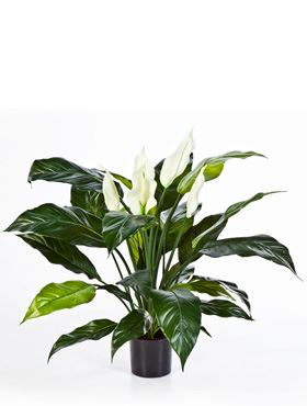 Umelá rastlina spathiphyllum de luxe V73 cm