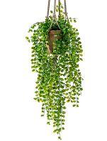 Umelá rastlina ficus pumila v závesnom terakotovom kvetináči V80 cm