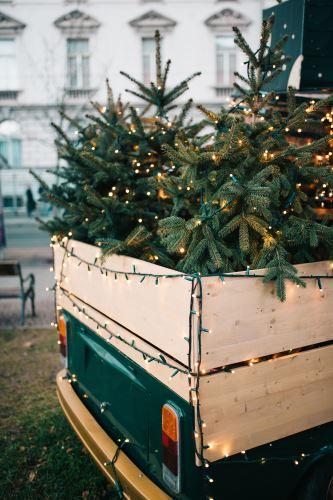 Najkrajšie živé vianočné stromčeky HydroFlora Bratislava