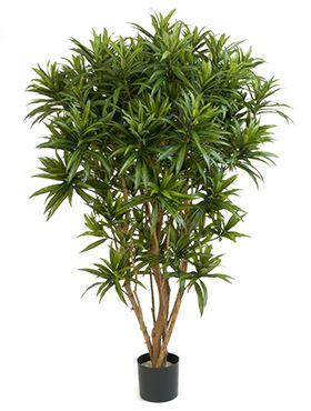 Umelá rastlina dracaena reflexa jamaica rozkonárená V150 cm