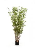Umelý bambus (oriental bamboo tree) V220 cm