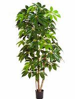 Umelá rastlina schefflera amate V220 cm