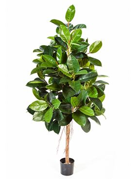 Umelá rastlina ficus elastica V210 cm